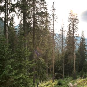 forêt du Vercors et changement climatique